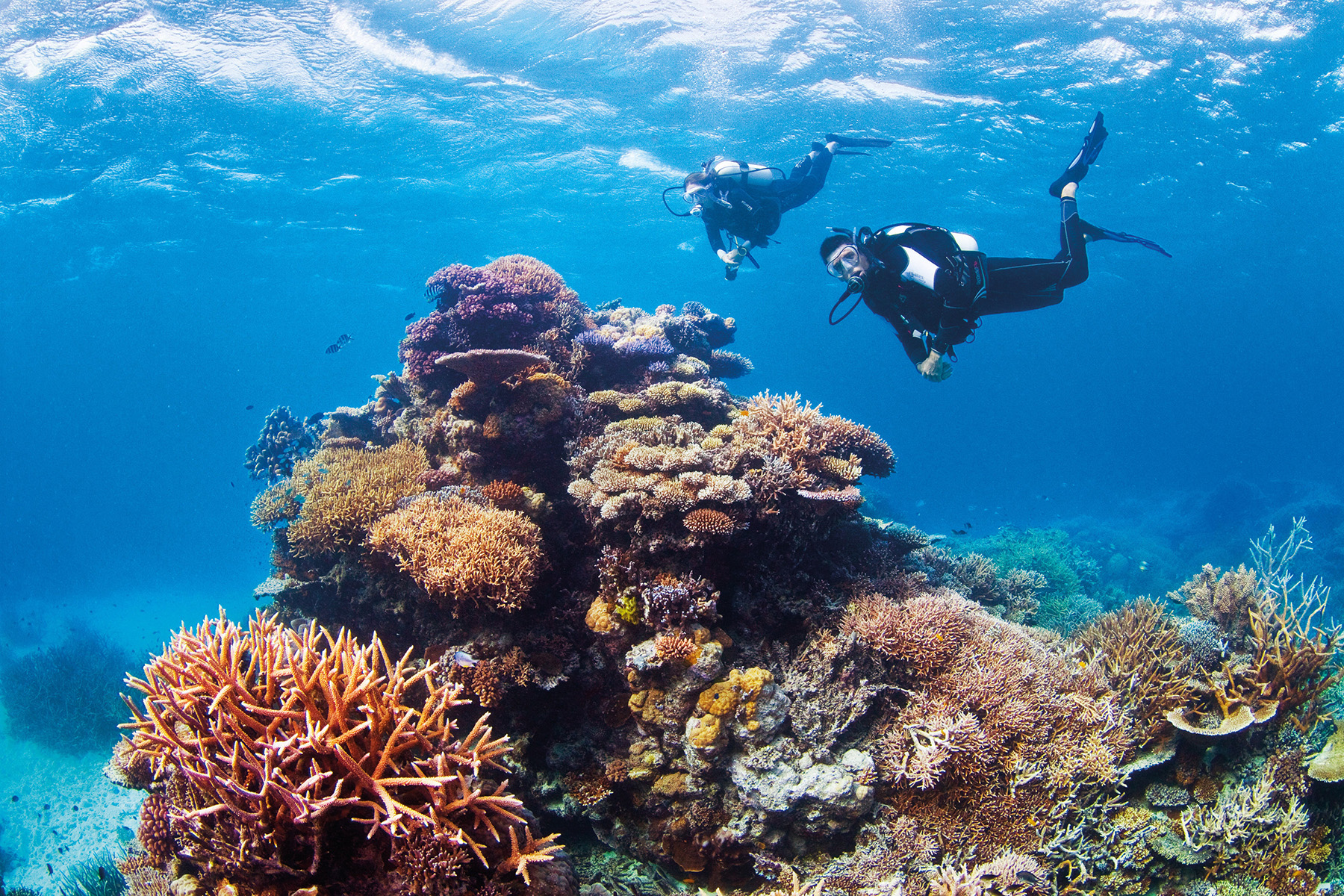 Challenger Bay Drift at Ribbon Reefs, Great Barrier Reef, QLD  (Photo: Tourism Port Douglas and Daintree)